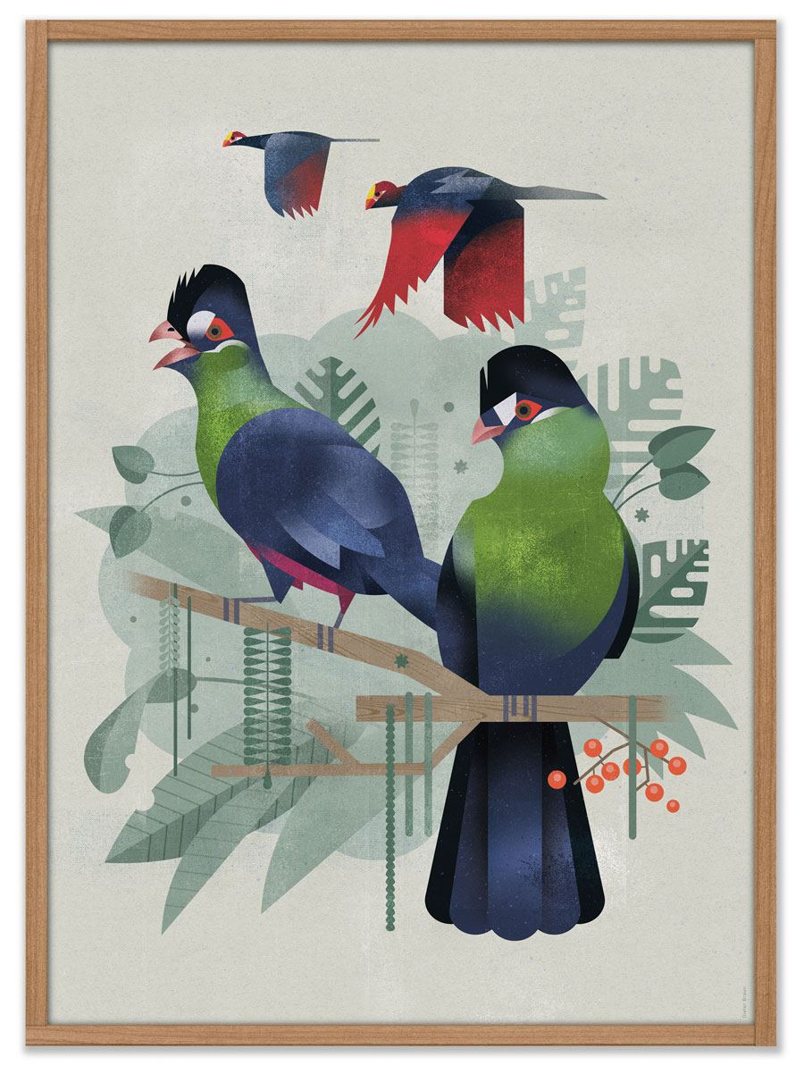 Seidenturako Poster (50 x 70cm)
