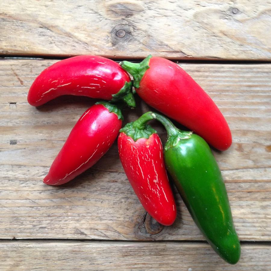Hot Pepper Jalapeño M Saatgut