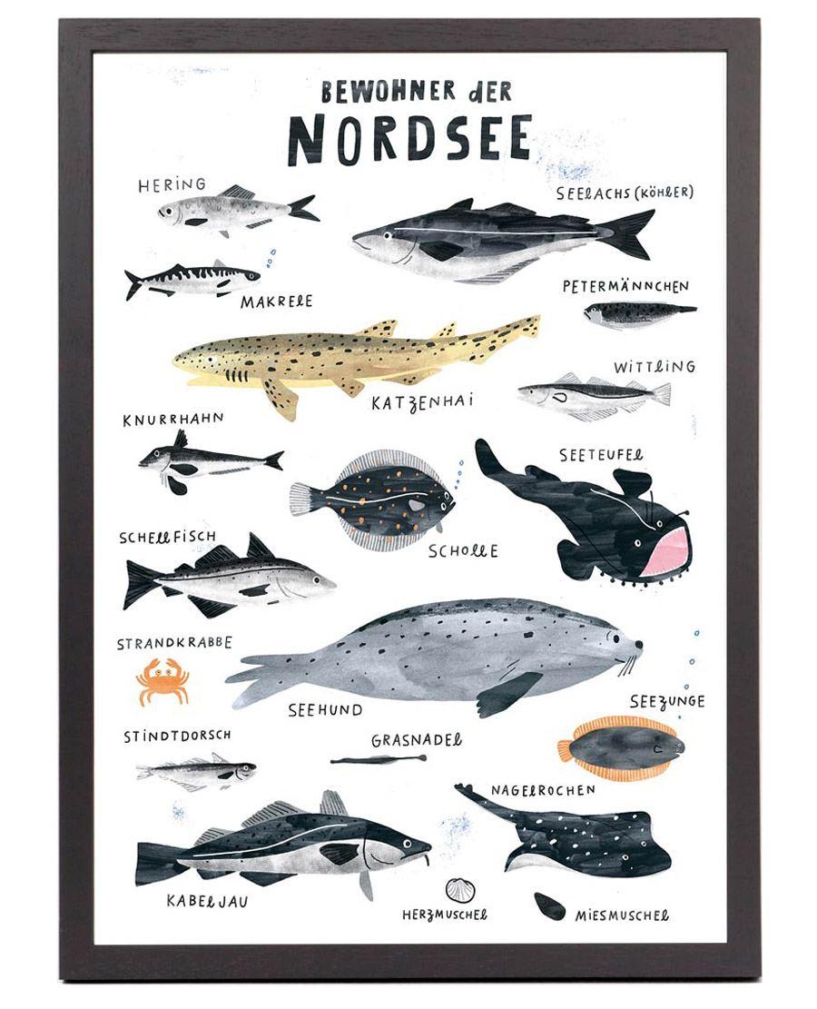Bewohner der Nordsee Print (Din A3)