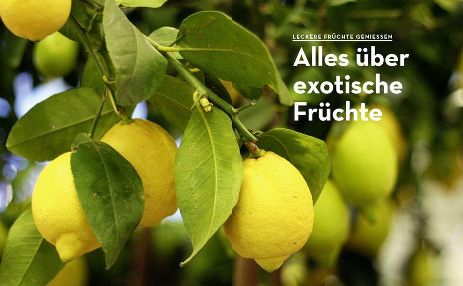 Exotische Früchte selbst ziehen