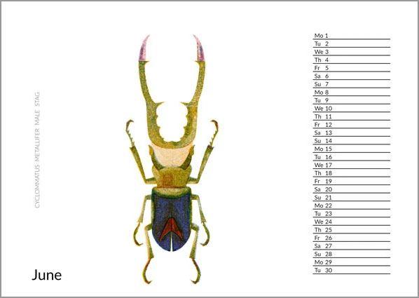 2020 Bugs Kalender