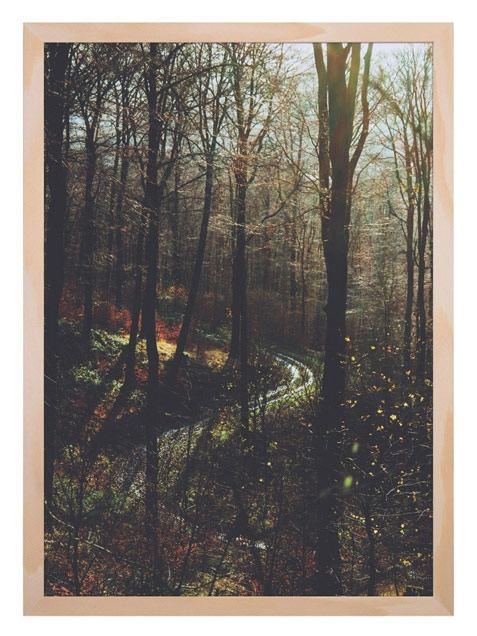 Herbstwald Poster (Din A3)