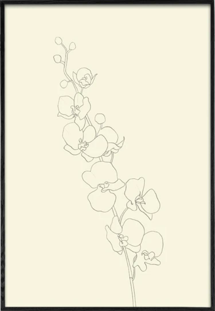 Orchid 1 Poster (50 x 70 cm)