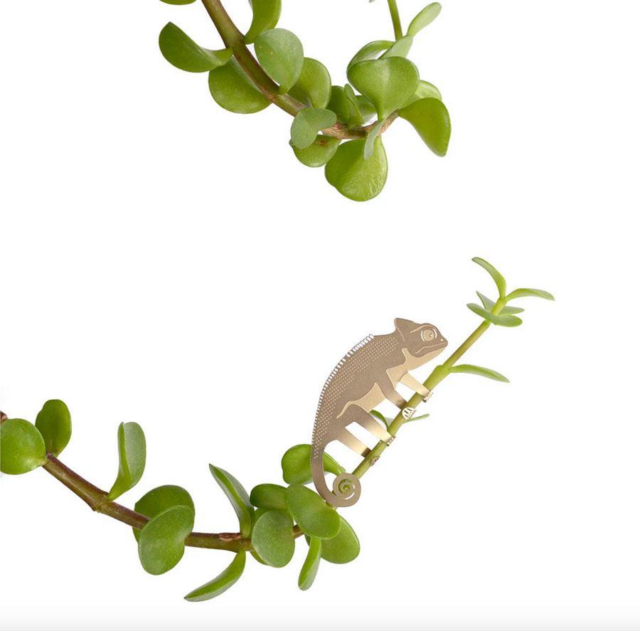 Plant Animal Chamäleon
