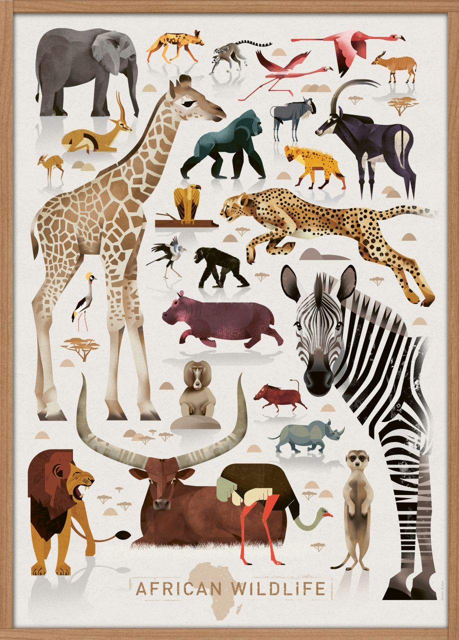 African Wildlife Poster (50x70cm)