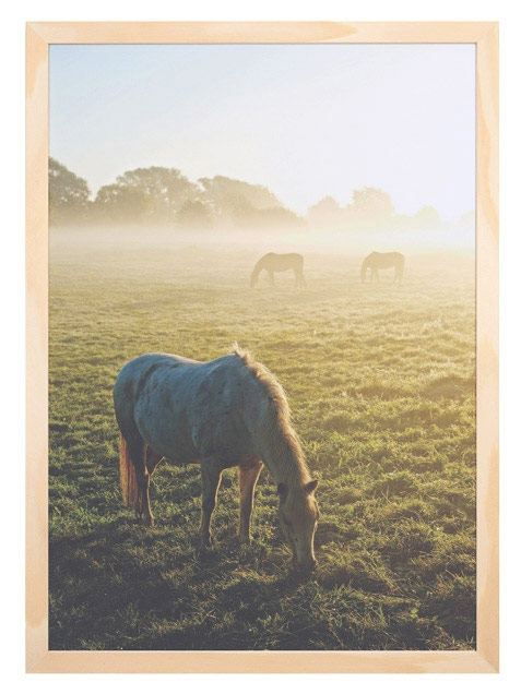 Morgenlicht Print A3