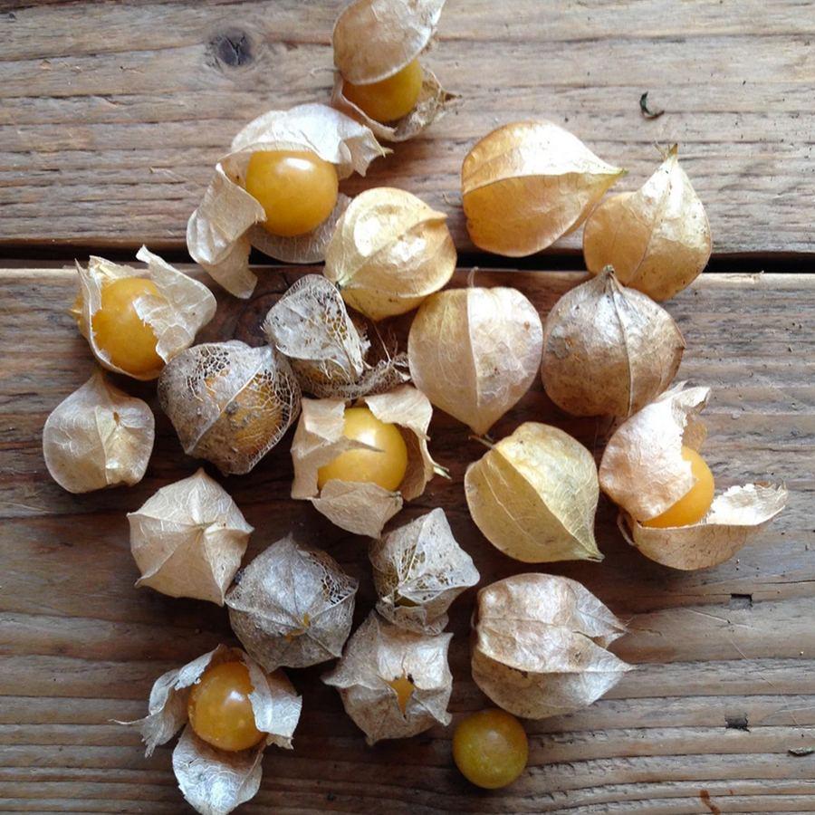 Golden Berry Cape Gooseberry Saatgut