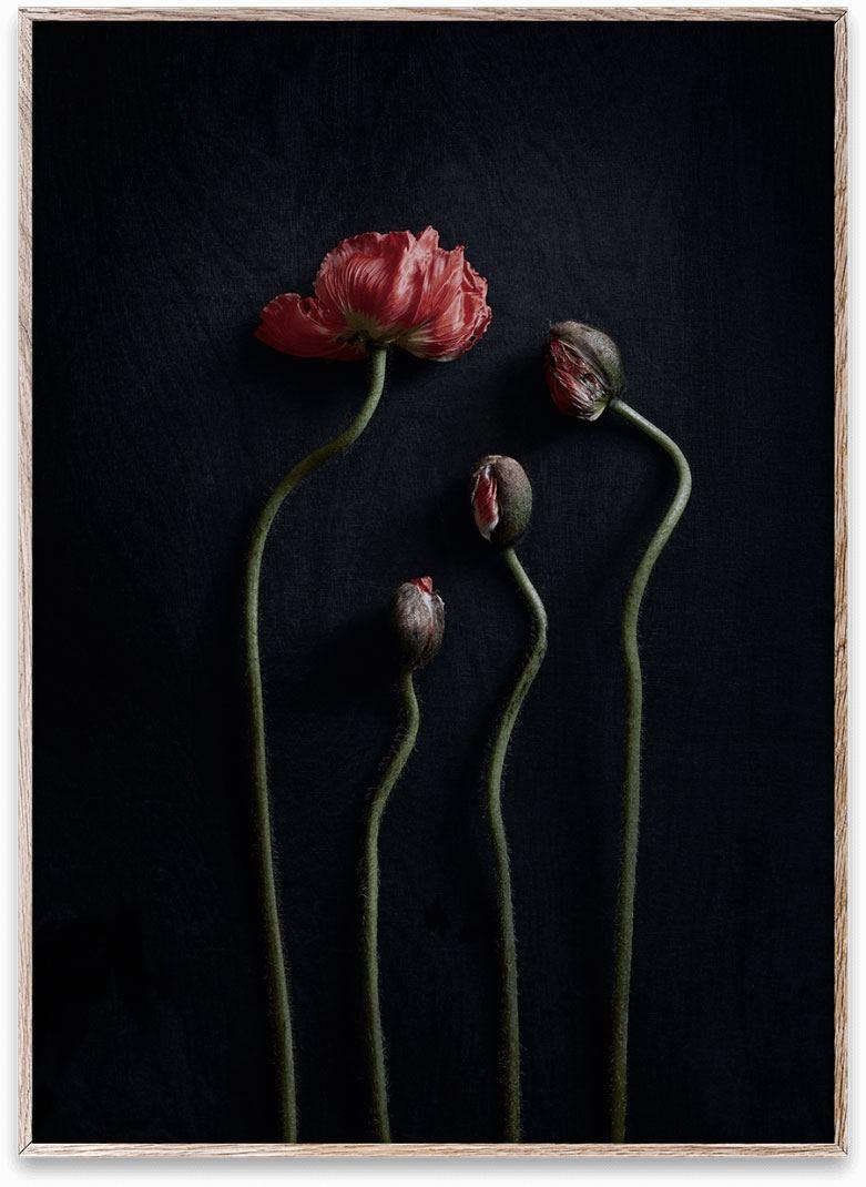 Still Life 02 Poster