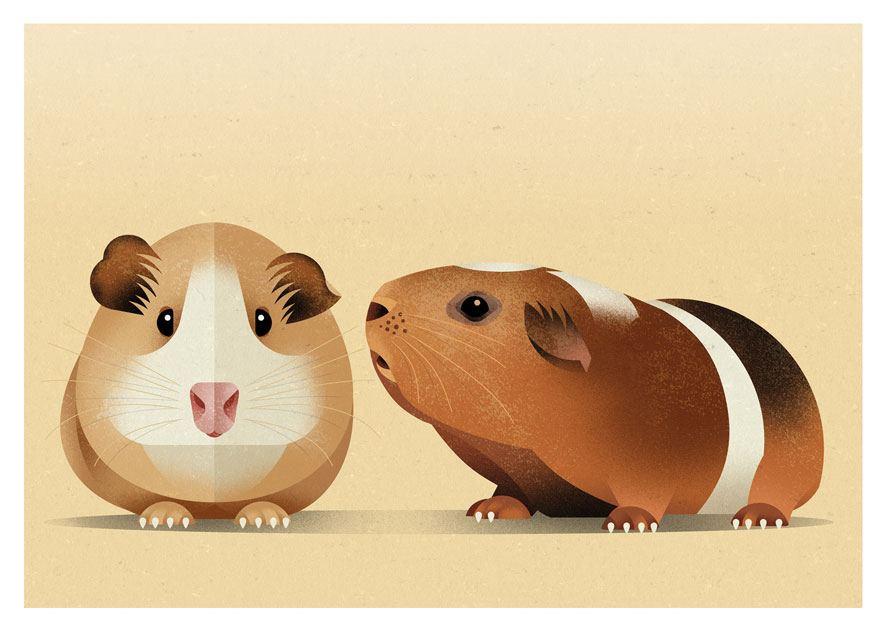 Guinea Pig Postkarte