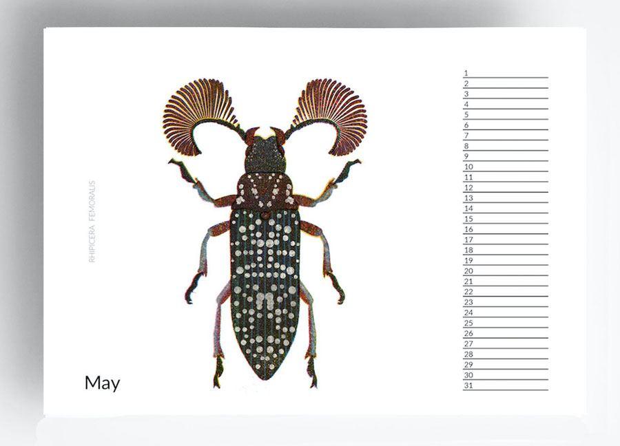 Geburtstagskalender Bugs