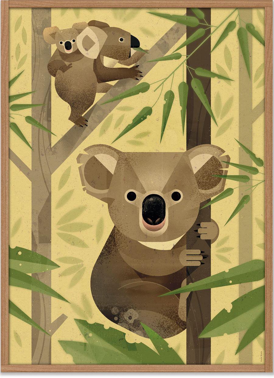 Koala Poster (50x70cm)