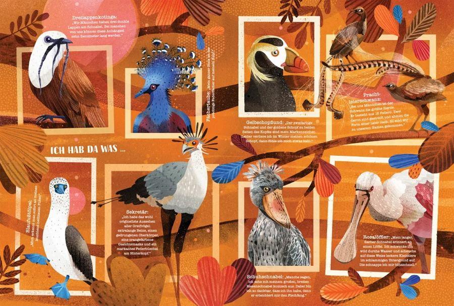 Schau mal, wer da fliegt - Die bunte Welt der Vögel