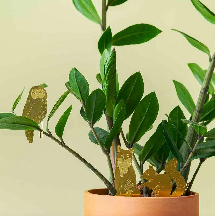 Plant Animal Eule