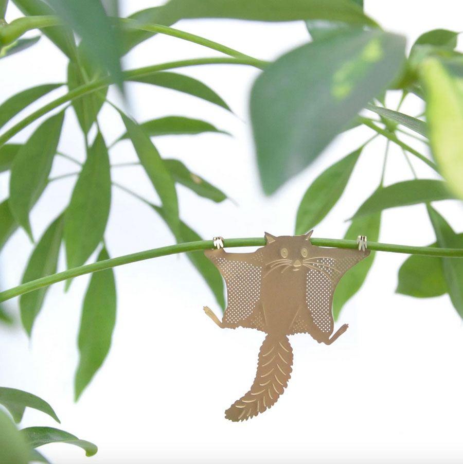 Plant Animal Fliegendes Eichhörnchen