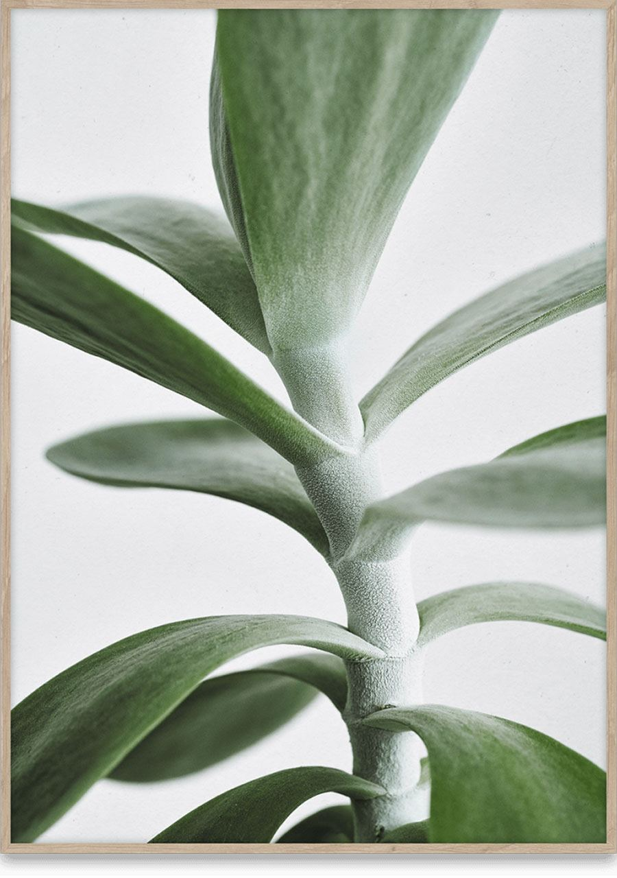 Green Home 04 Poster (50x70cm)