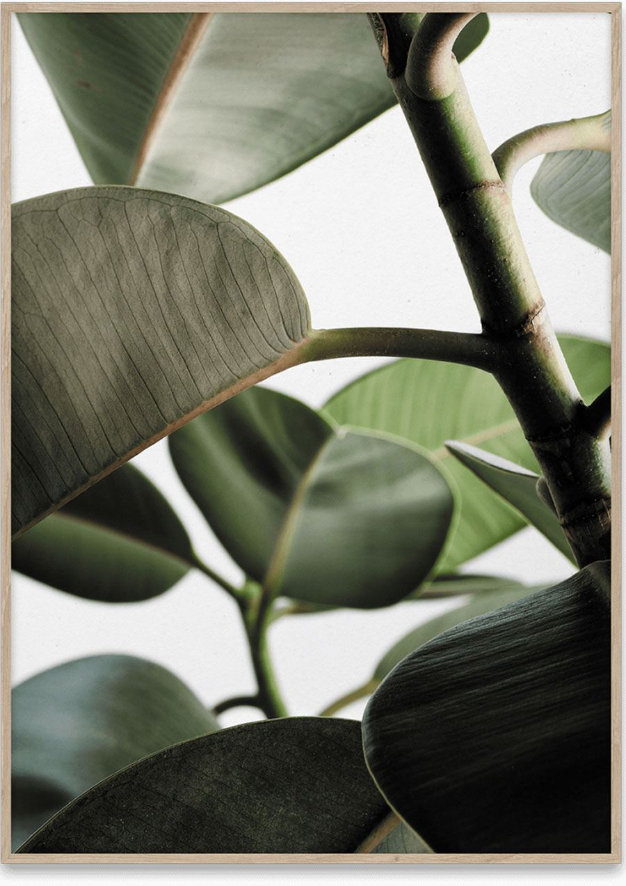 Green Home 03 Poster (50x70cm)