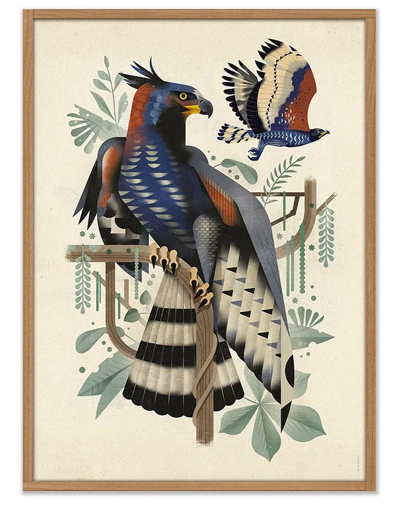 African Crowned Eagle Poster (50 x 70cm)
