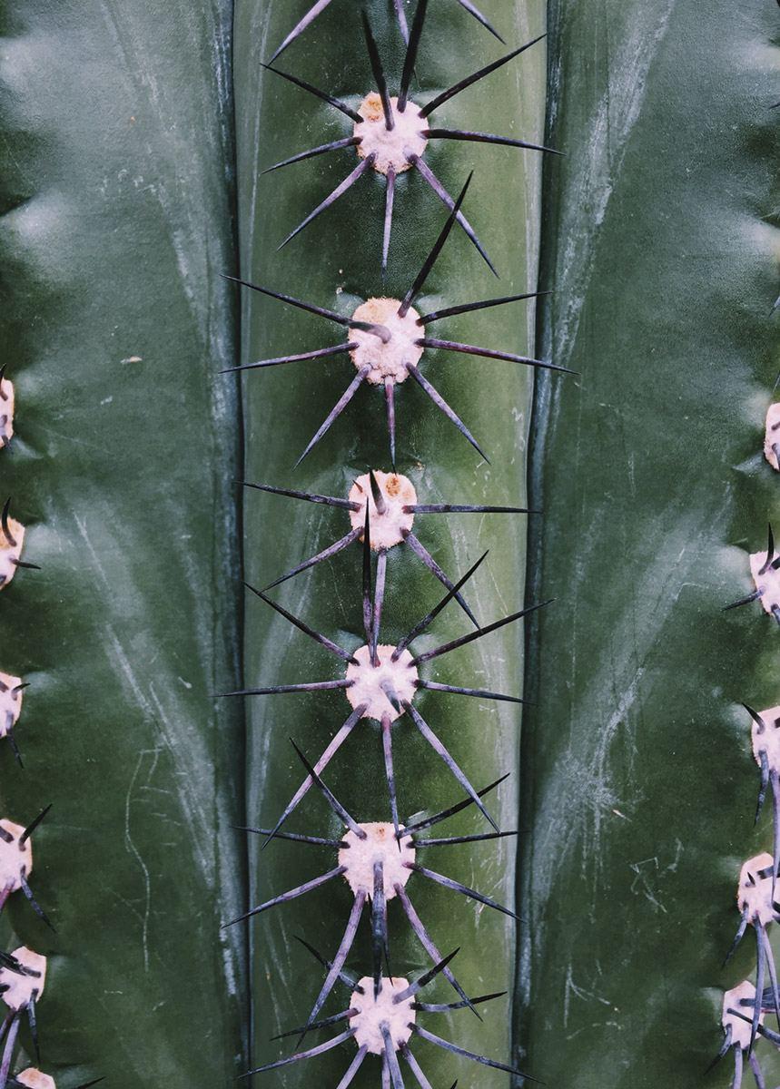 Natural Symmetry Poster (50 x 70 cm)