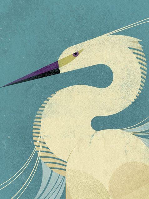 Little Egret Poster (50 x 70 cm)