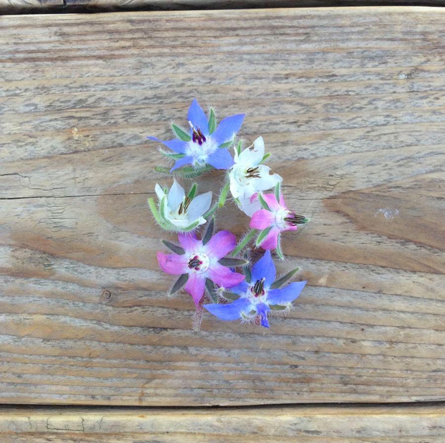 Borretsch Blue and White Flowered Mix Saatgut