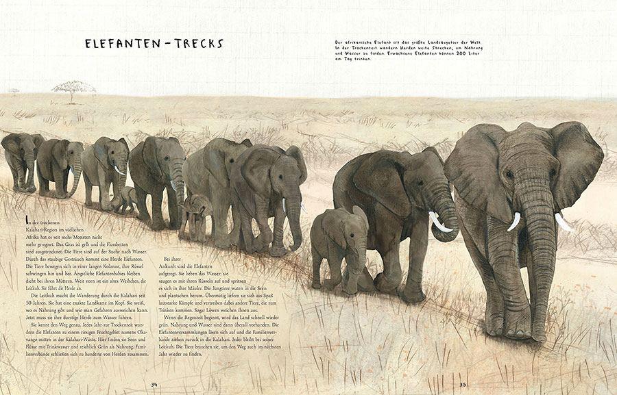 Wanderungen - Die unglaublichen Reisen der Tiere
