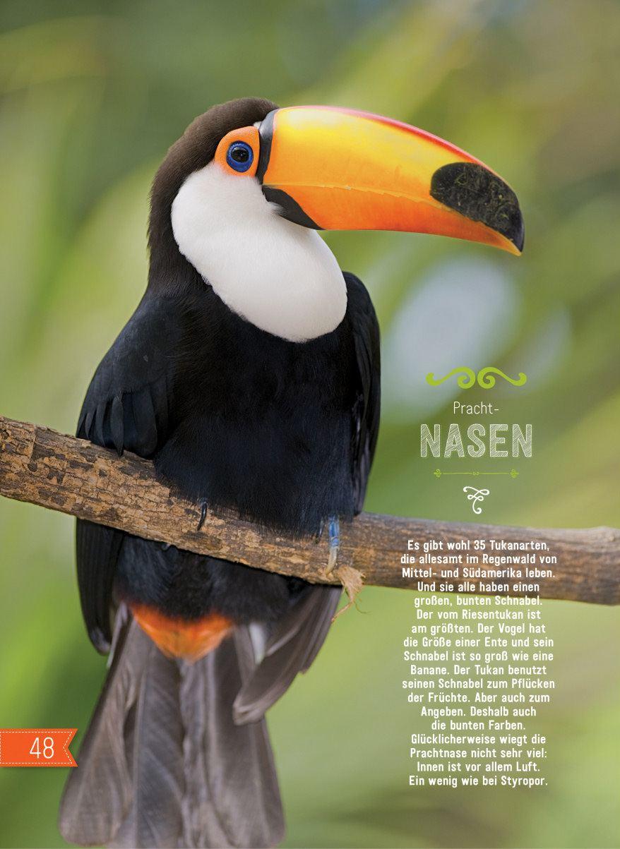 Vögel-Entdecken-Verstehen-Mitmachen