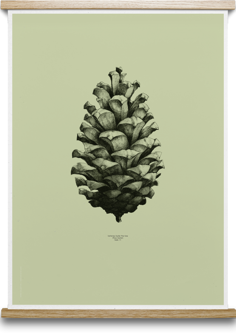 Pine Cone Light Forest Green Poster (50x70cm)