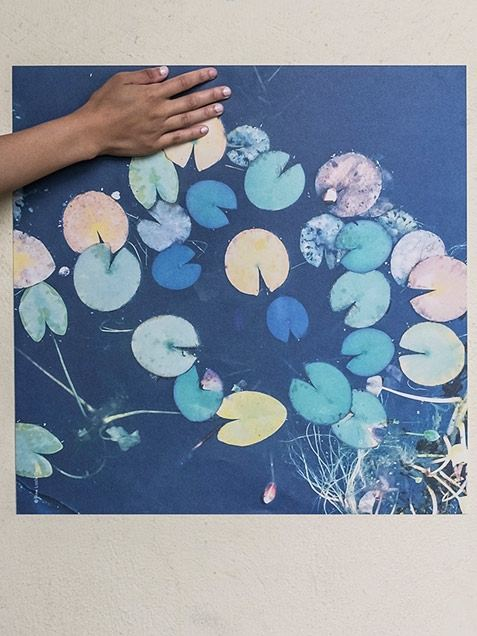 Water Lilies Poster (50x50cm)