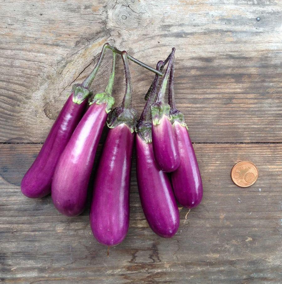 Eggplant Slim Jim Saatgut