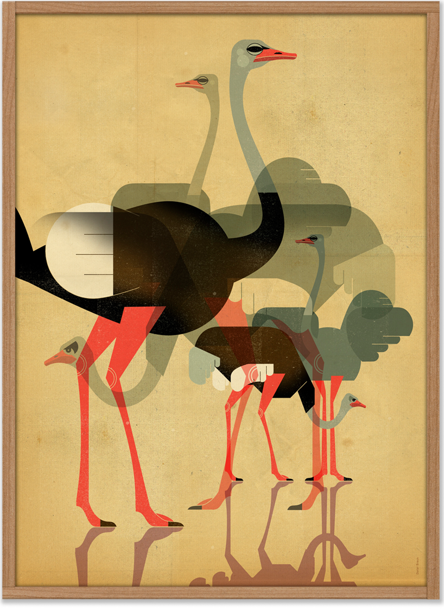Ostriches Poster (50 x 70 cm)
