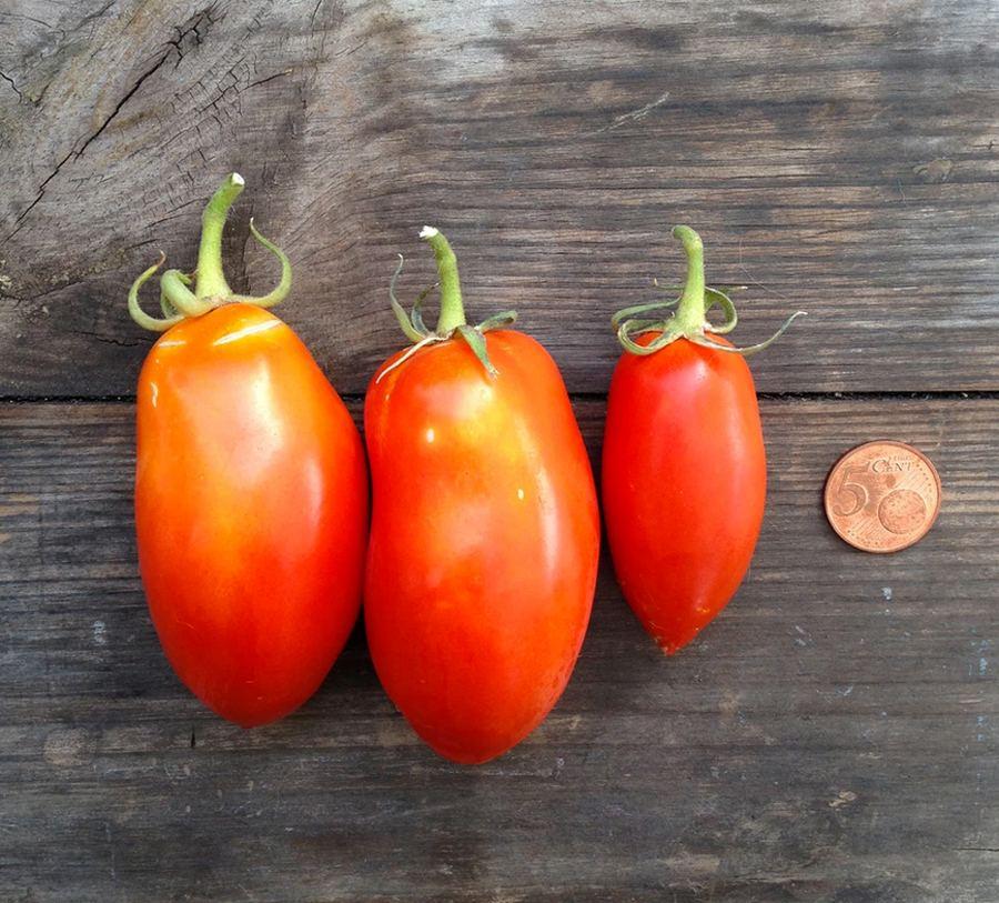 Tomato San Marzano Nano Saatgut