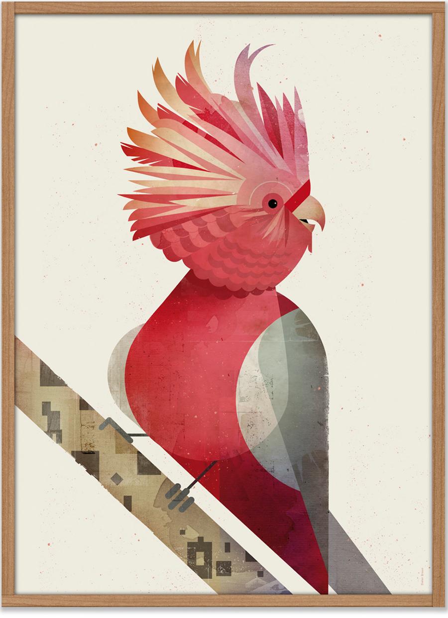 Kakadu Poster (50 x 70 cm)