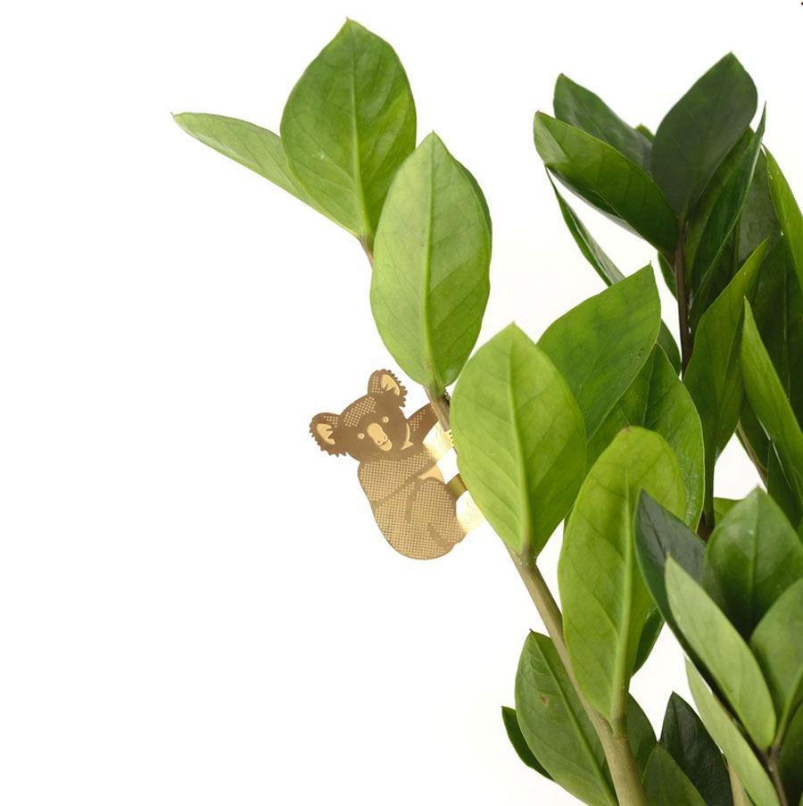Plant Animal Koala