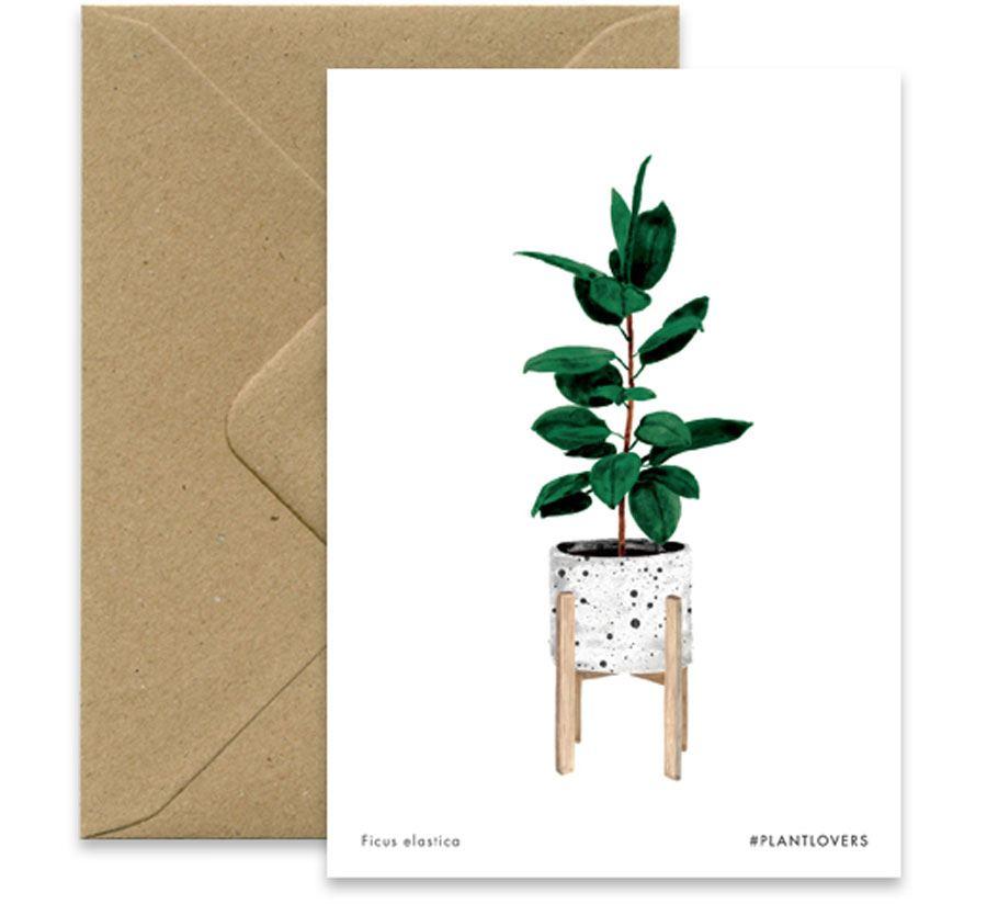 Ficus Karte