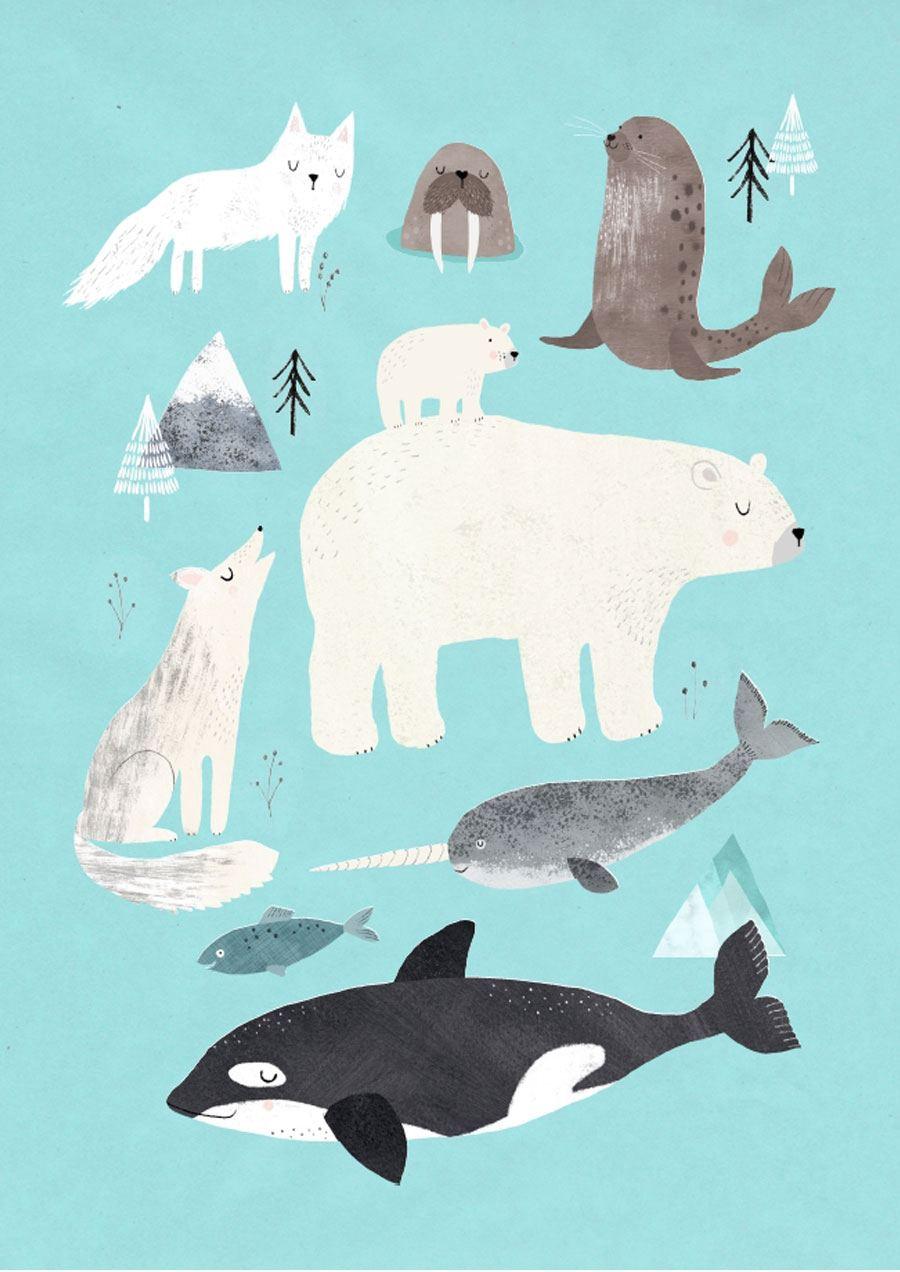 Artic Animals Poster (50x70cm)