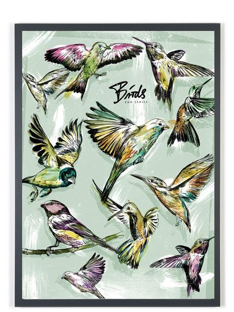 Birds (Zoo Series) Poster (50 x 70 cm)
