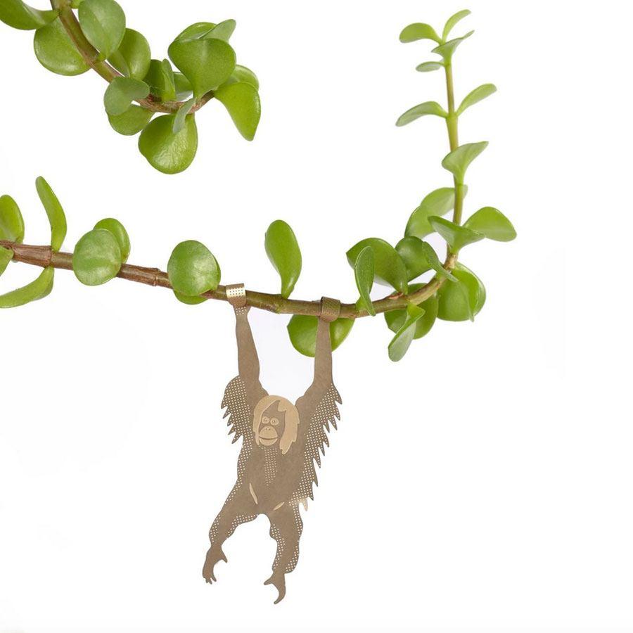 Plant Animal Orang Utan